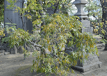 syukireisai_image_03
